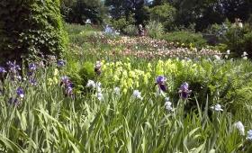 Botaanikaaed