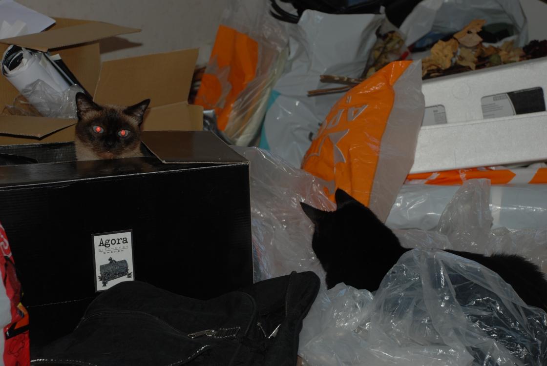 Kõik pakitud