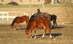 Tori hobused