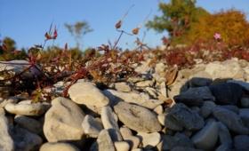 Kassari kiviklibu