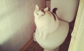 Kass potikaanel