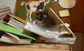 Kodukontor meeldib ka kassidele